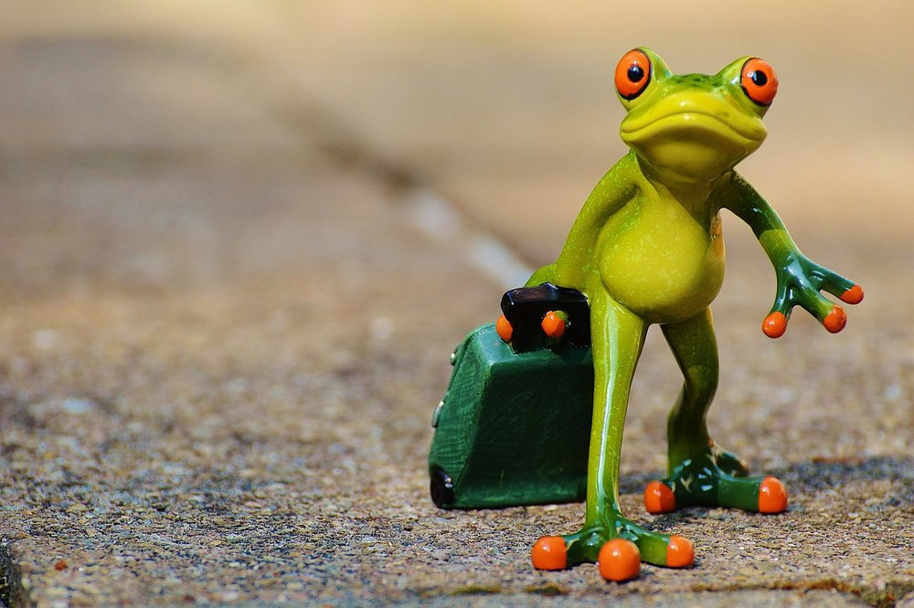 frog-897418_1280.jpg