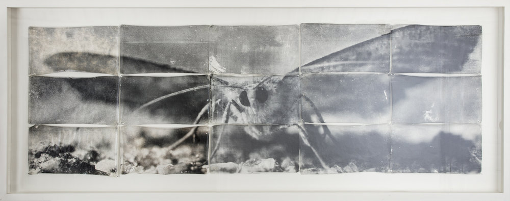 Mike + Doug Stern  Attracted to light  2003 Gelatin silver print on Thai Mulberry paper 75 x 250 cm