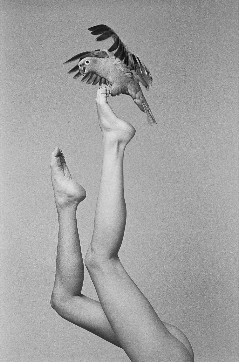 Photo: Christophe von Hohenberg's Wookie Legs