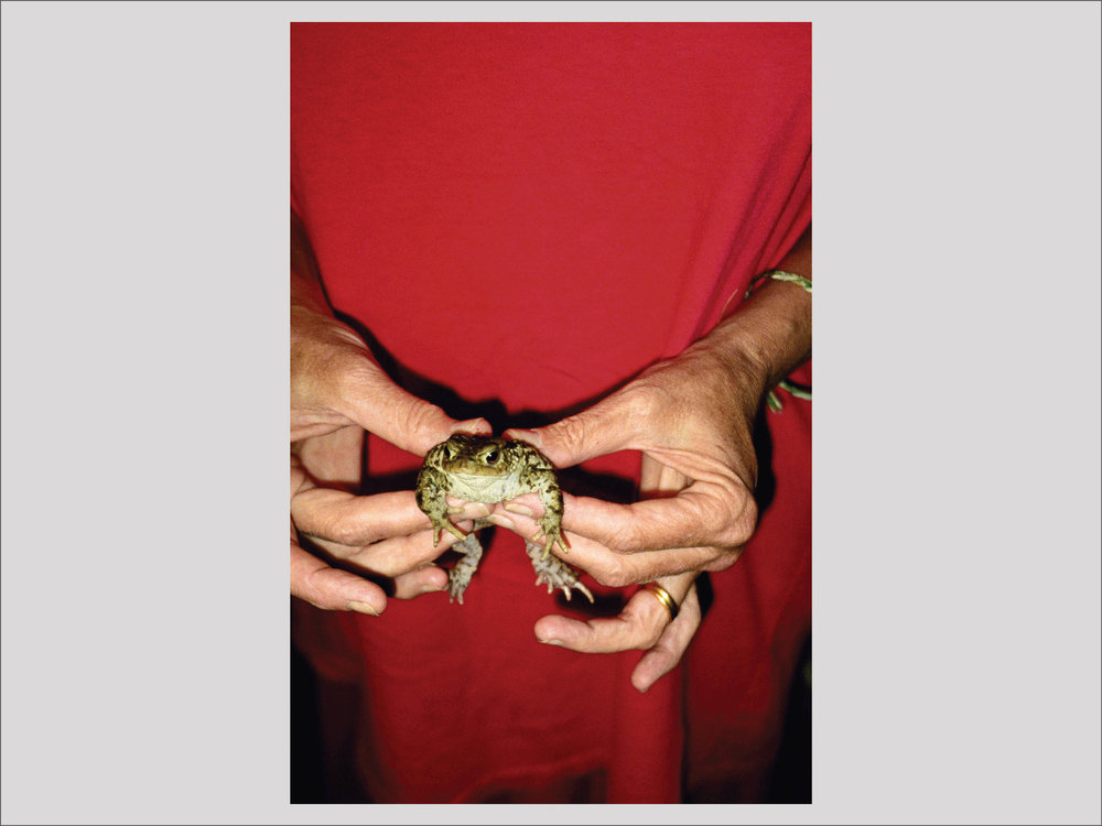 """Mary McCartney    Gently Holding Frog  1995 101,6 x 67,3 cm Edition of 2 + 2 AP  """"Right now, her works are shown at Fotografiska. She was the most famous daughter even before she was born, the first Beatles-baby. She grew up with extremely creative and supporting parents who let her explore her own artistic world. One of my favorite photos in all the categories, is this one. Linda McCartney holding a helpless frog in her hands. It's both funny and portrays a strong image of parenthood.""""   Available"""