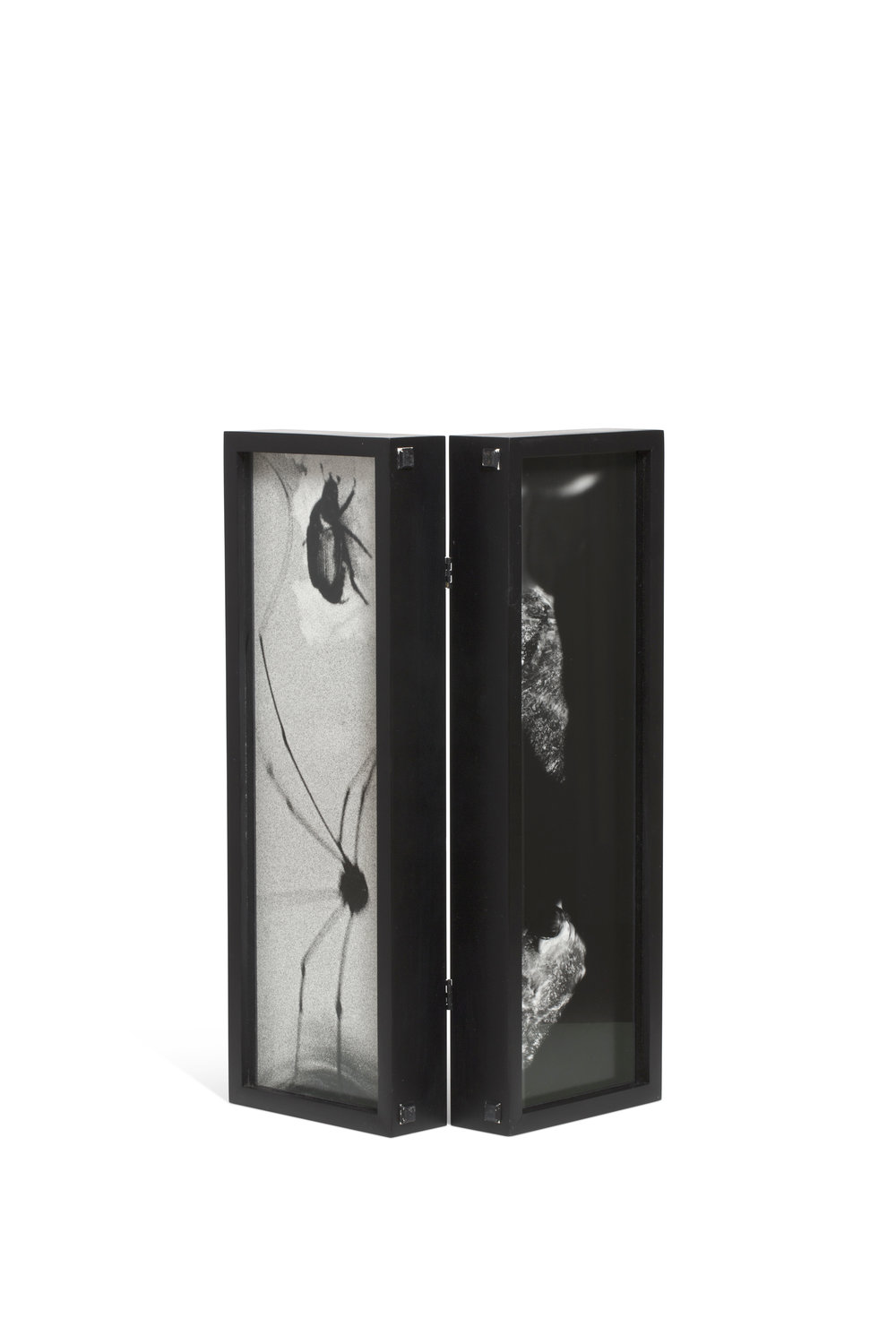 Hope Sandrow   Box: Spider Beetle  1989 Gelatine silver print mounted on cardboard, diptych in two joined boxes, edition 1/3 Each: 13,2 x 42,3 cm (Box measures: 15,5 x 44,2 x 10 cm)