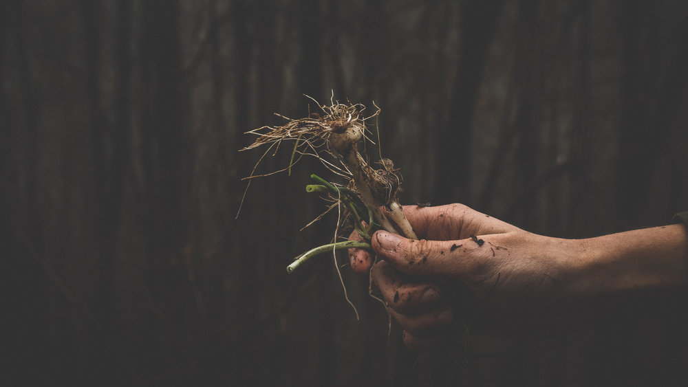 Finding the Root Cause can help you diffuse the emotions and feel in control of them