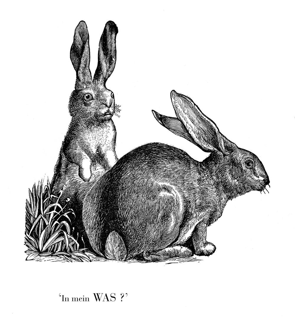 konijn in mijn wat kopie.jpg