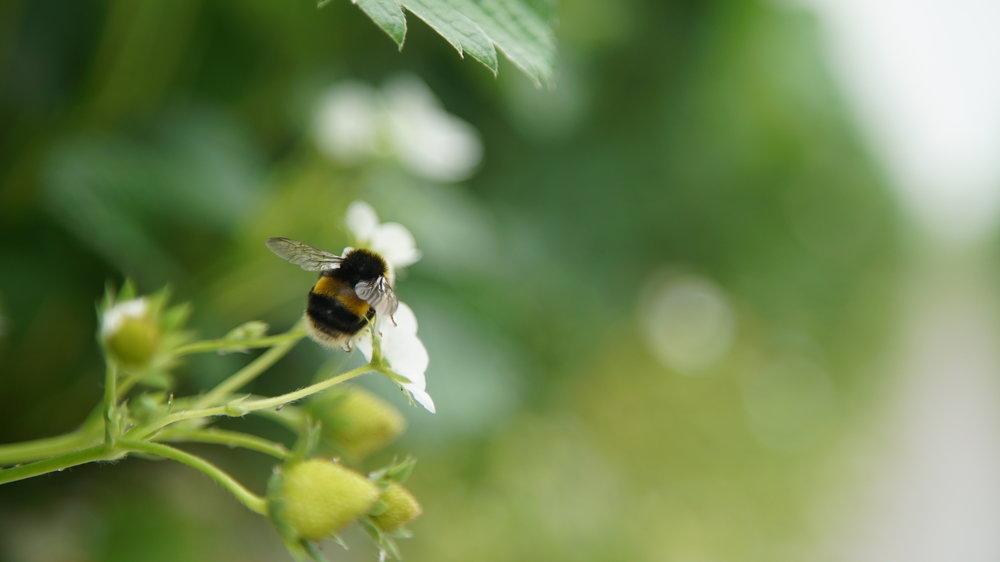 Bee+DSC02489.JPG