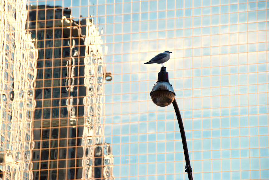 Bird on lamppost - 1 copy 2.jpg