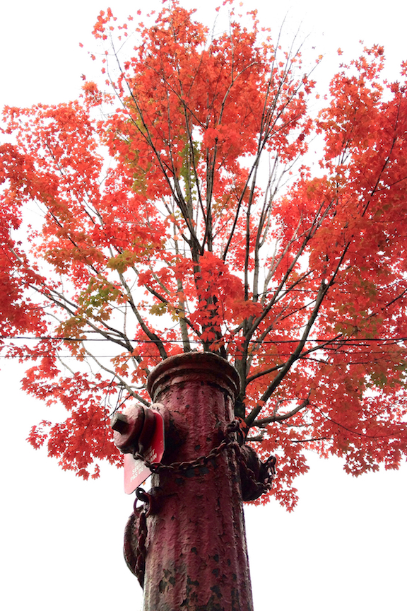Hydrant and red tree - 1 copy 2.jpg
