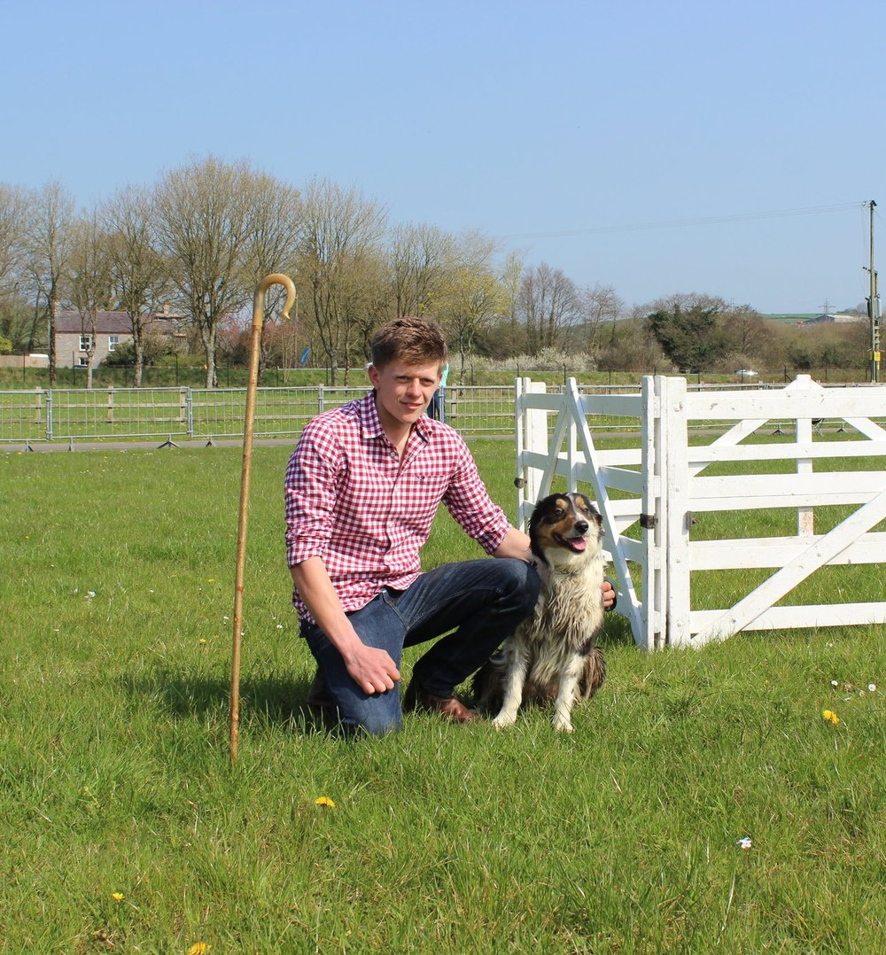 Ben Owen & Dotty in the Sheepdog Trials at last year's Wales Field Day.
