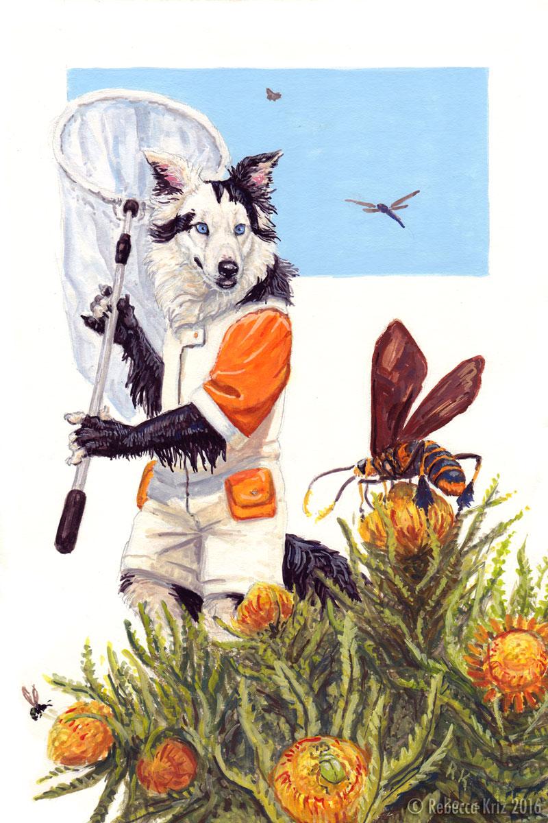 Cynocephalus Entomologist
