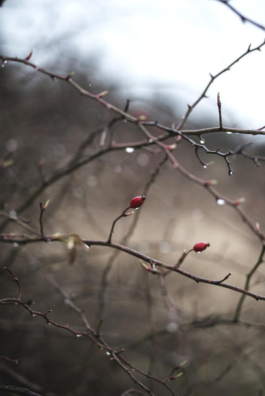 Kővirág - Étel, Ital, Ágy