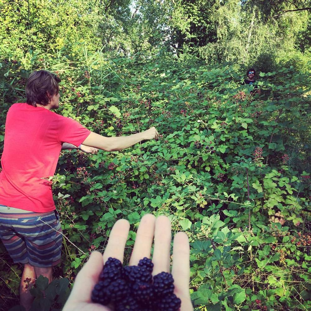 Finding berries while doing something else is always great.