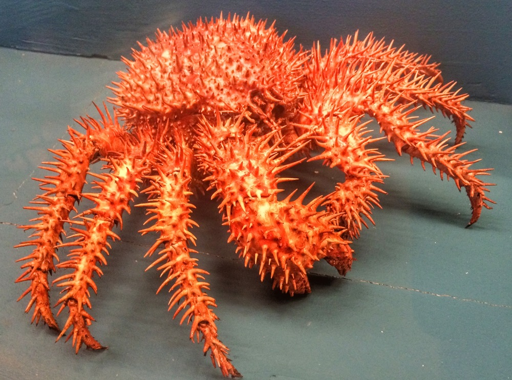 pinchy crab