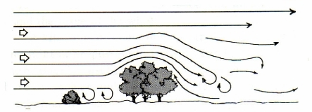 13558-work-Wind%2520Over%2520Trees.jpg