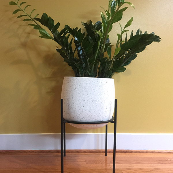 ZZ Plant I Welcomed Into My Home Last Year (Shooting Off New Growth)