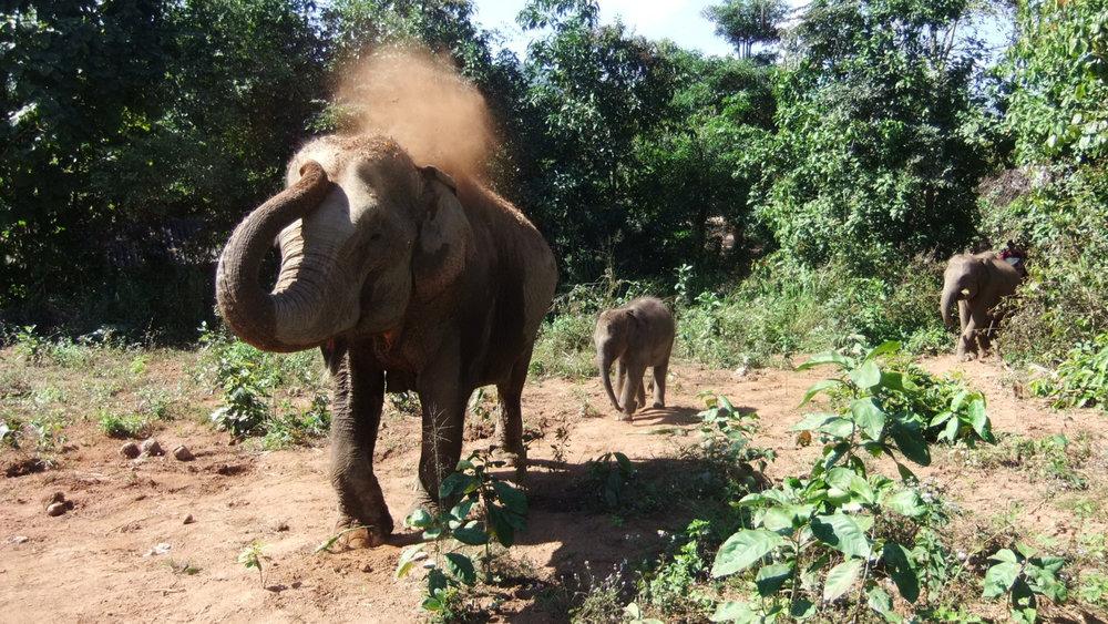Elephant-Freedom-03-DSCF8684-2.JPG