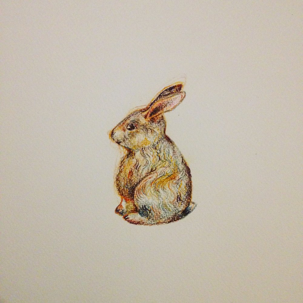 Amanda Bathory rabbit illustration 2016.JPG