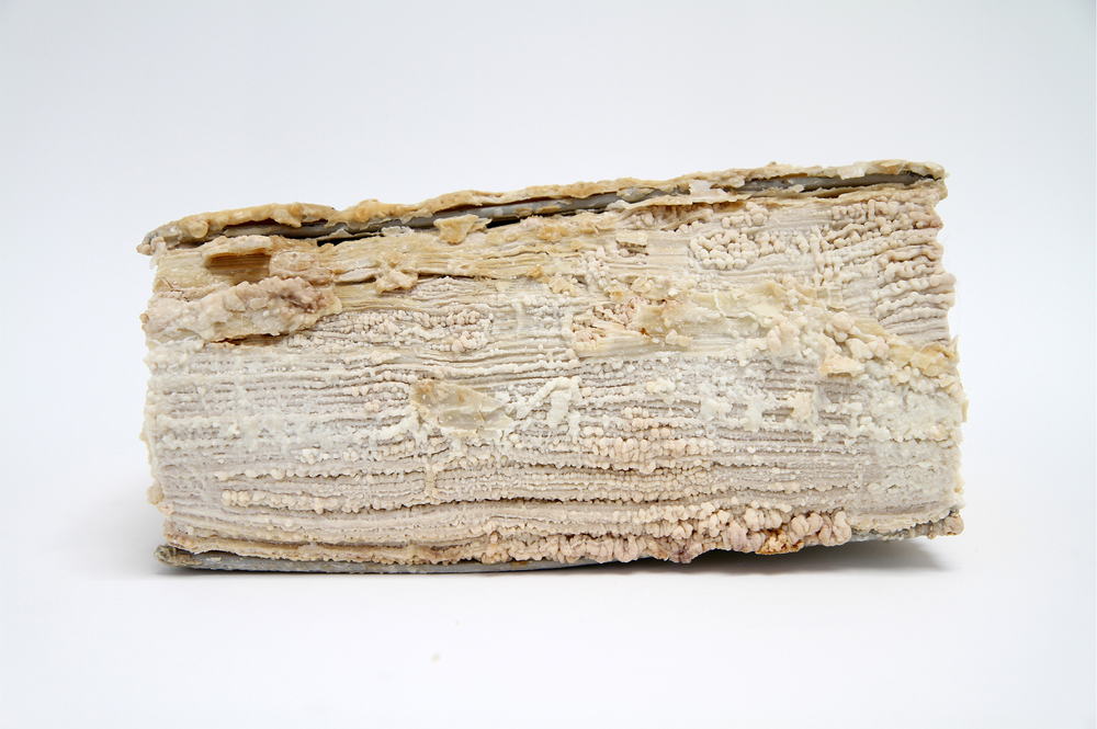 Relic (Emily Post's Etiquette, Elizabeth L. Post)  (detail) 2012 Monosodium Glutamate (MSG), found book 10 x 7 x 2 inches