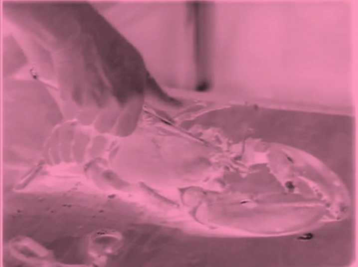 Cooking Shows  2013 (video still) digital video with Baker-Miller Pink filter, duration 1:57 hours (loop)