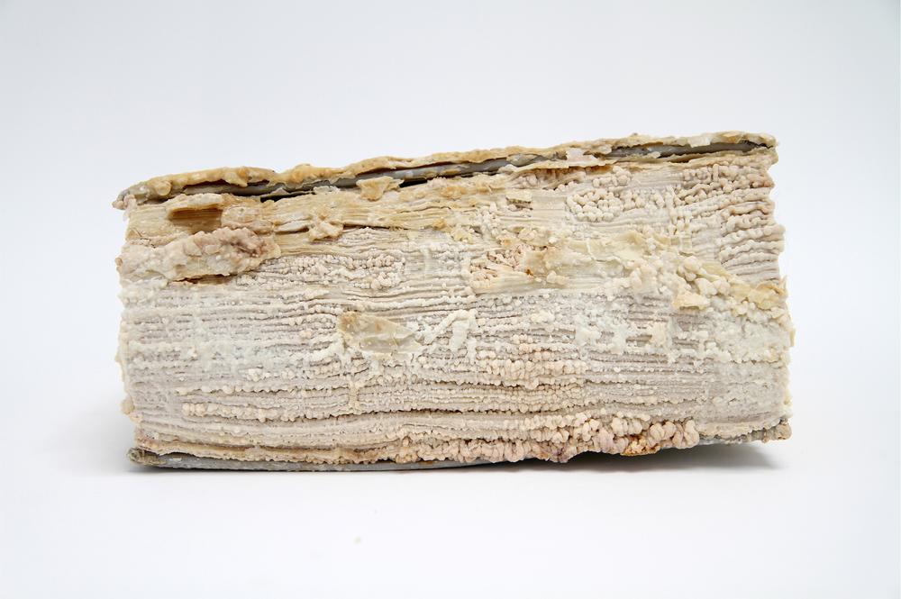 Relic (Emily Post's Etiquette, Elizabeth L. Post)  2012 Monosodium Glutamate (MSG), found book 10 x 7 x 2 inches