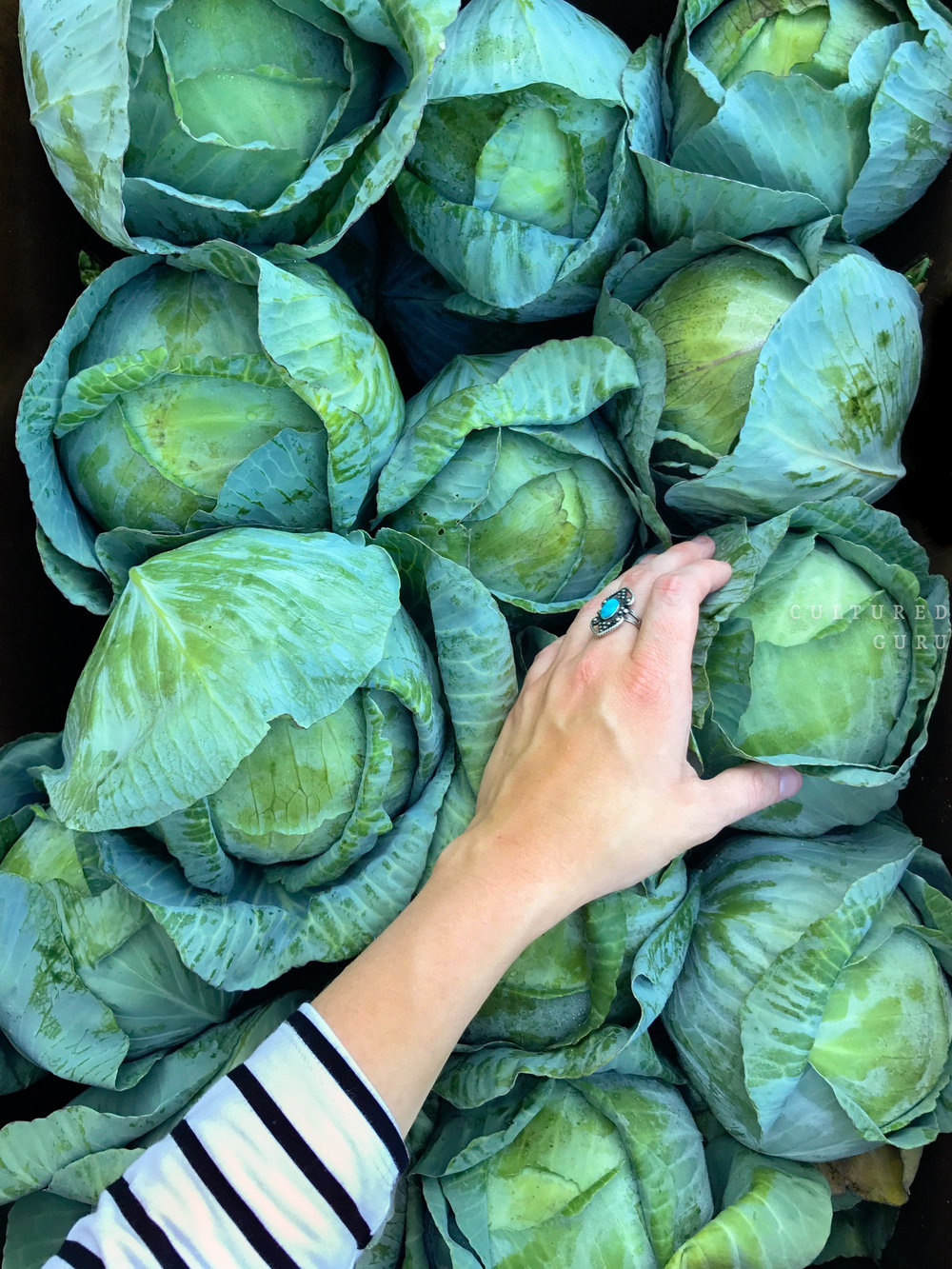 Raw Cabbage