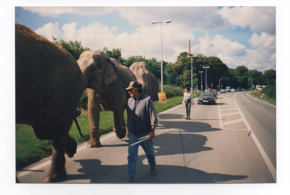 elephant-commute.jpg