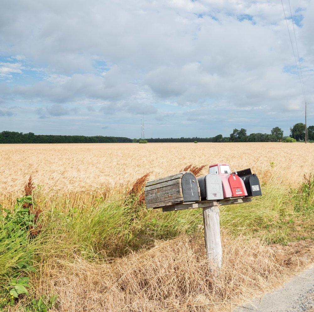 Wheatfield near Bucktown