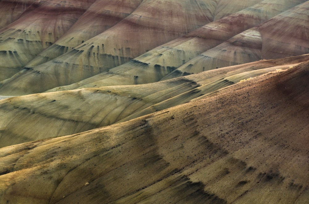 """fossil beds 1   8"""" x 12"""",12"""" x 18"""" or 20"""" x 30""""  2011"""