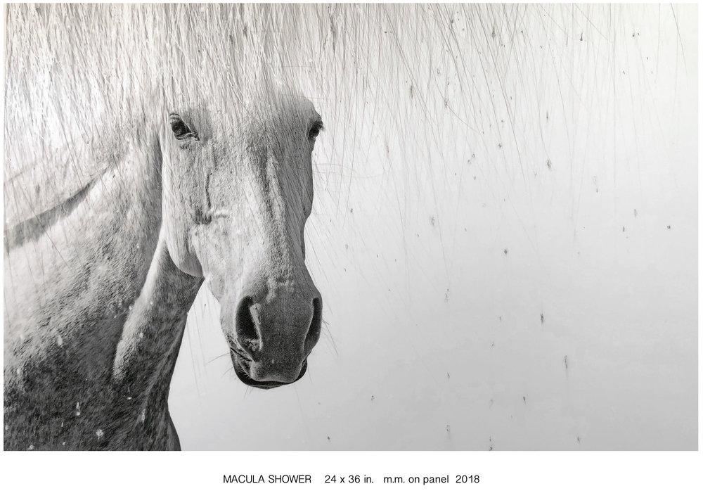 Macul Shower.jpg