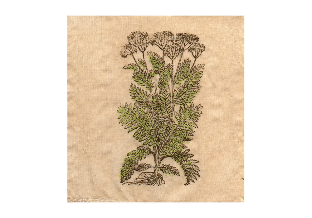 yarrow-patch.png