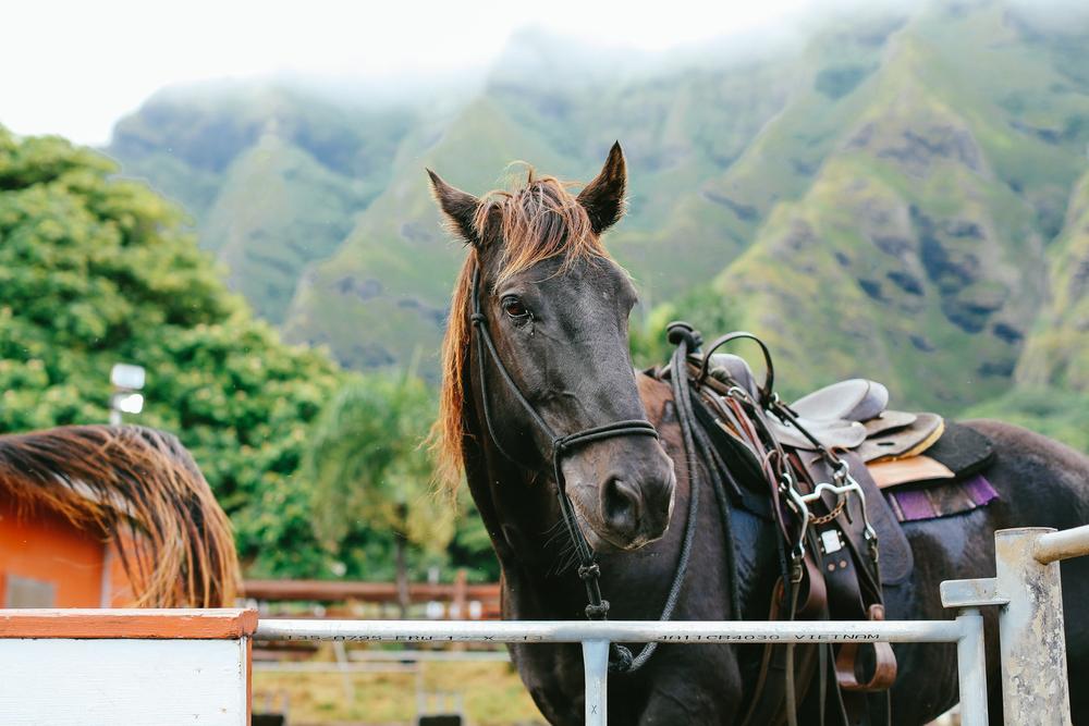 laurennicolefoot-blog-hawaii-oahu-2100-48.jpg