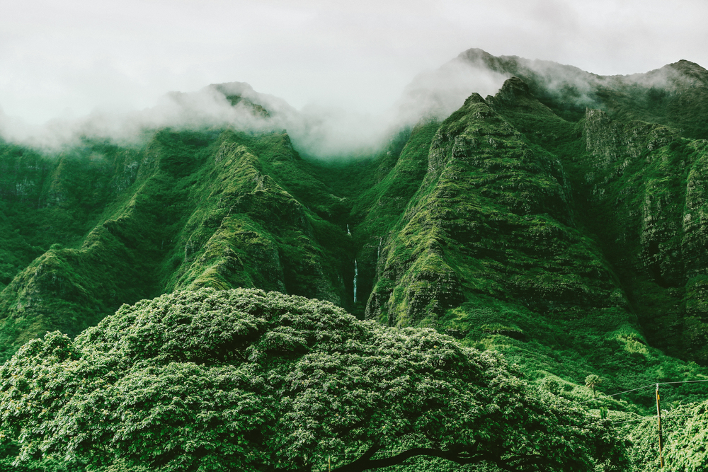 laurennicolefoot-blog-hawaii-oahu-2100-49.jpg