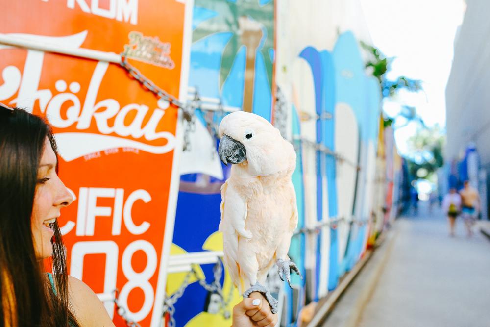 laurennicolefoot-blog-hawaii-oahu-2100-66.jpg