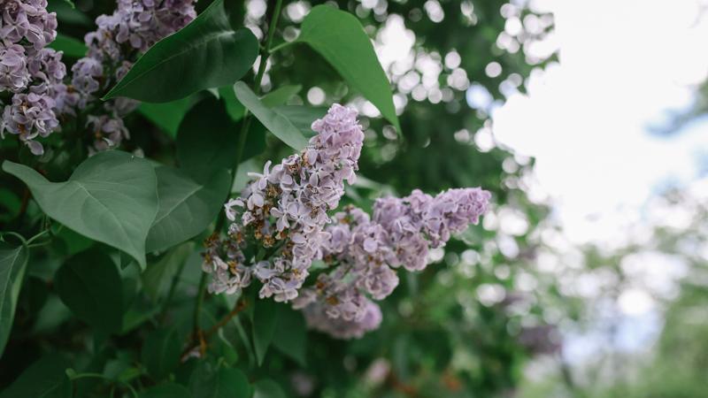 laurennicolefoot-photos-2018-may_mackiehouse_wide_800 (54 of 59).jpg
