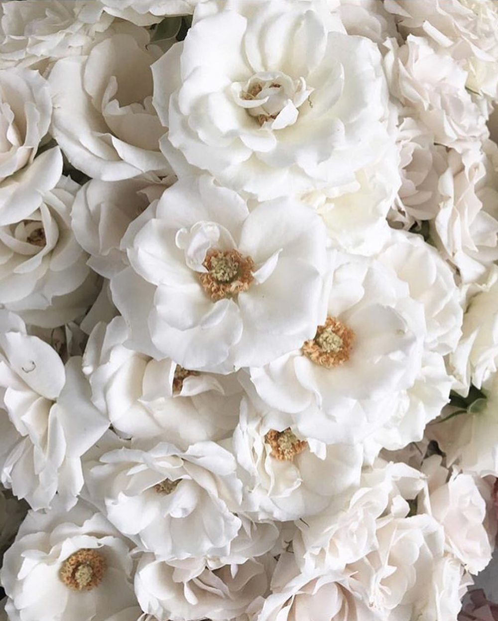 image source: the bridal theory instagram