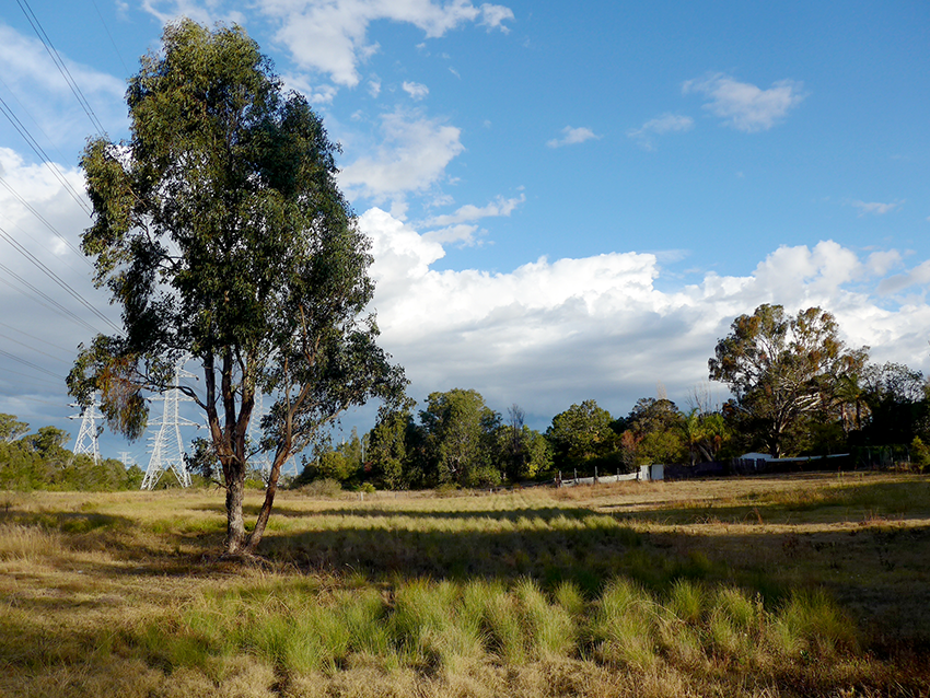 Greening Australia 3.png