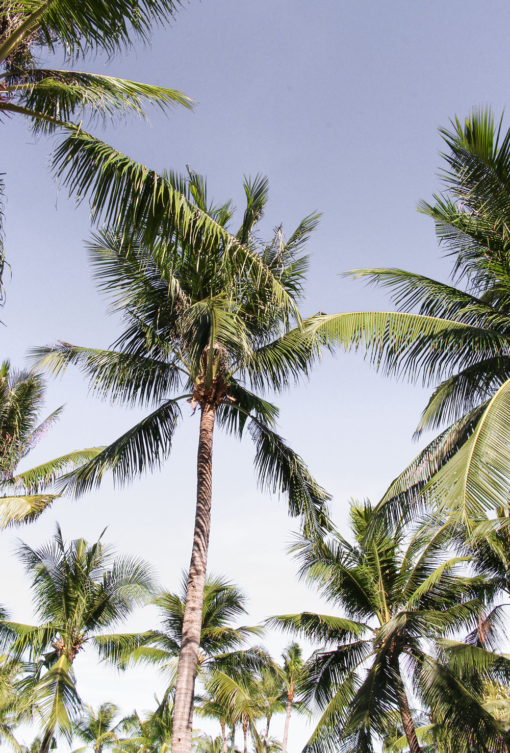 Tropical_Coconut Trees-Beautiful-Islands-Cebu-Philippines_Travel_Tropical-Holiday-Best-Places_Trip_-Hello-Miss-May-.jpg