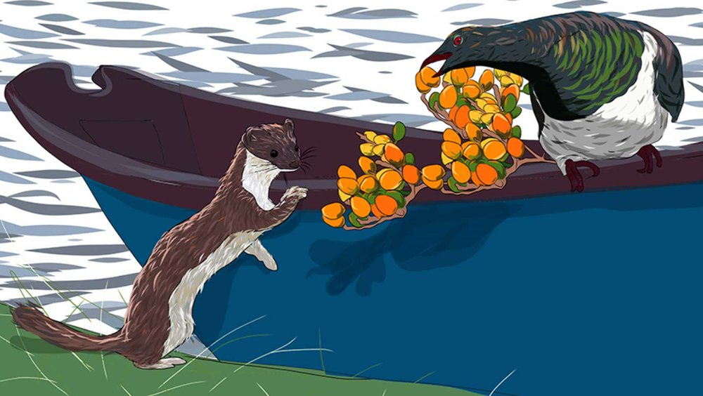 The Stoat, the Kererū and the Karaka Berries