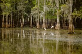 Henderson swamp tour2.jpg