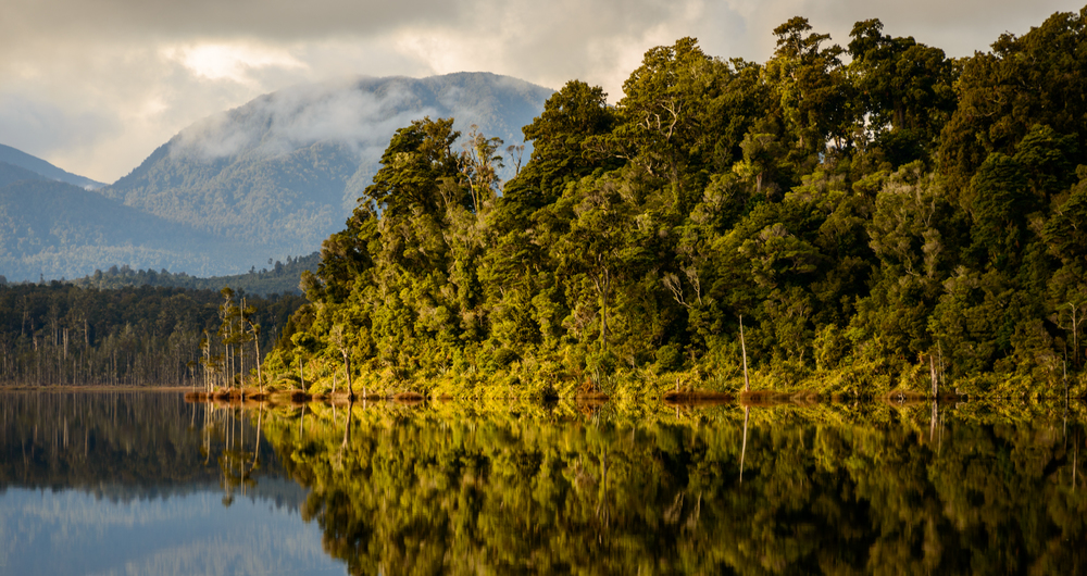 The soft light of the West Coast winter, Lake Mahinapua