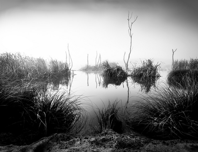 """Swamp Noir"", Peka Peka Wetlands"