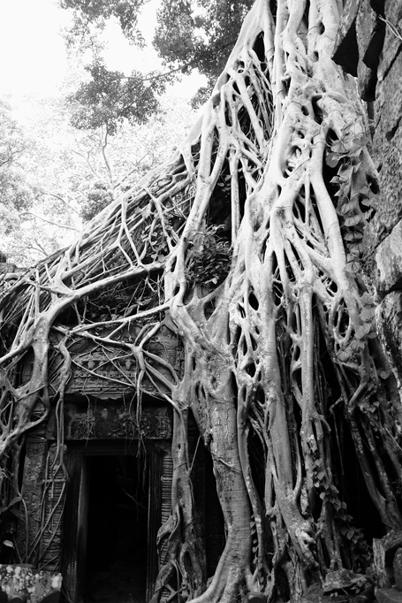 Day 1: Ta Prohm Temple