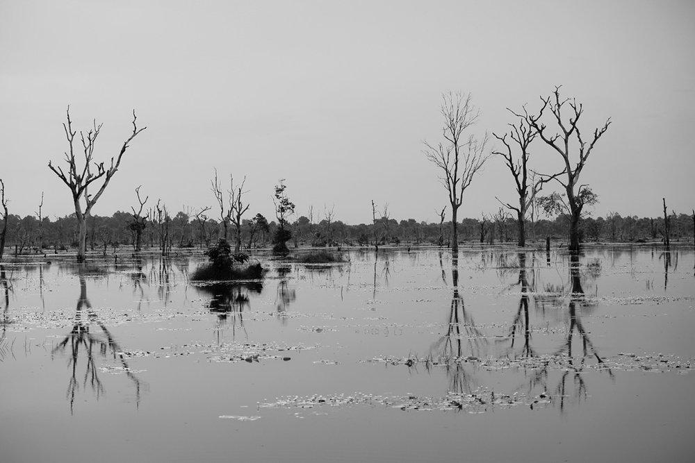 Day 2: Trees in the Jayatataka Baray