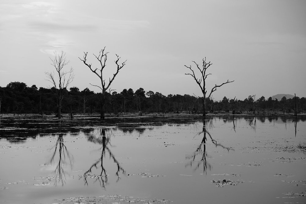 Day 2: Trees in the Jayatataka Baray