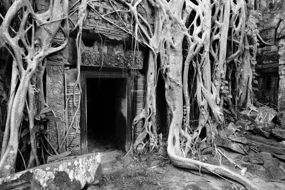 Day 3: Ta Prohm Temple