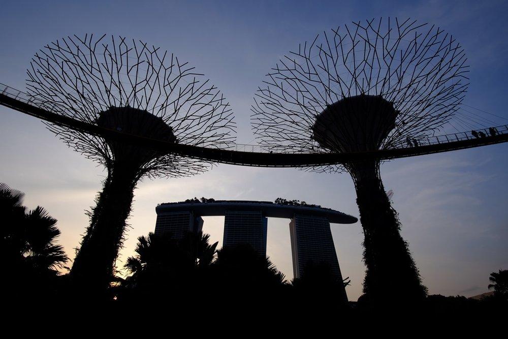 Supertrees and Marina Bay Sands at dusk