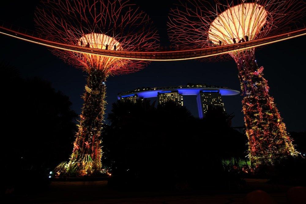 Supertrees and Marina Bay Sands