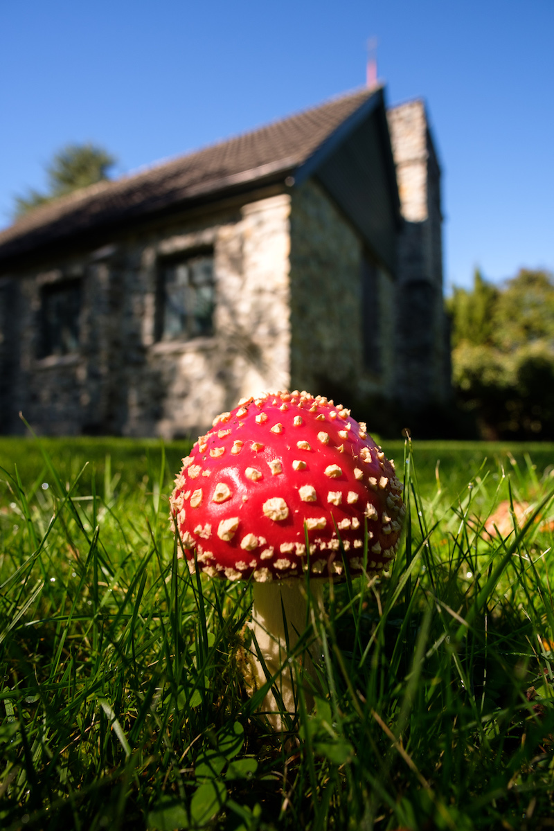 Toadstool at All Saints Church, Cave