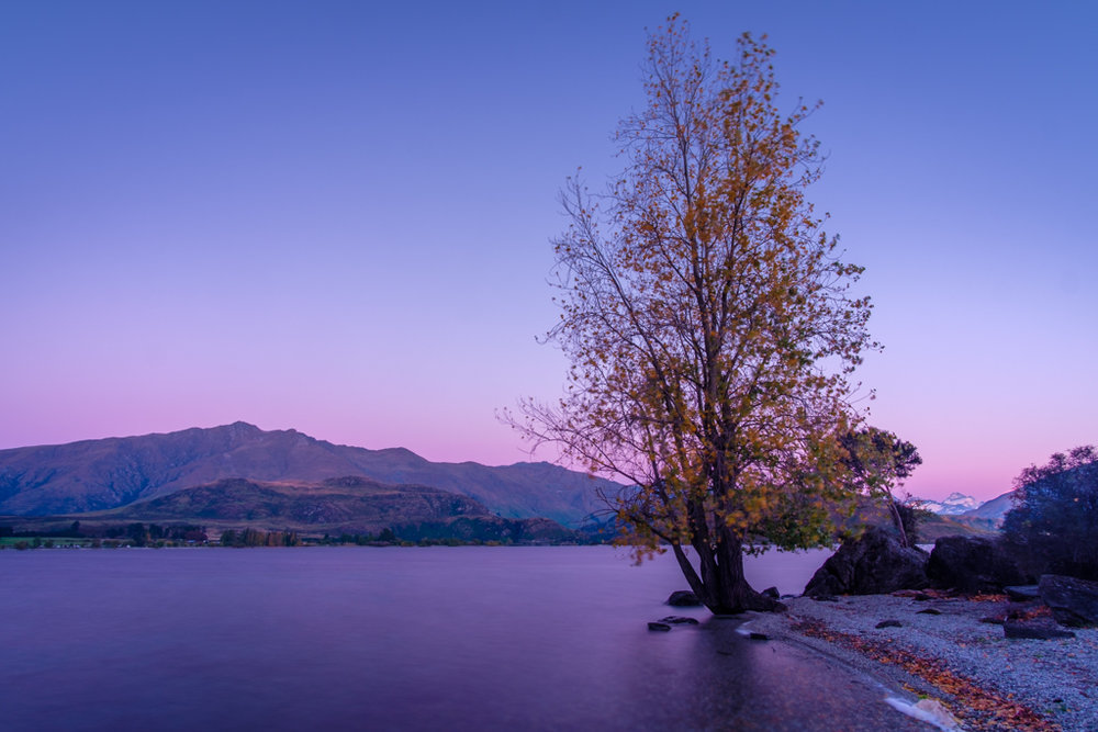 A different Wanaka Tree, Glendhu Bay