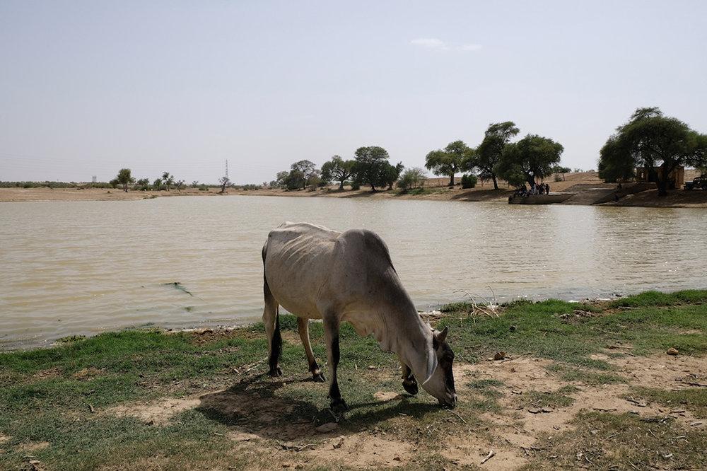 Rain water lake, Thar Desert