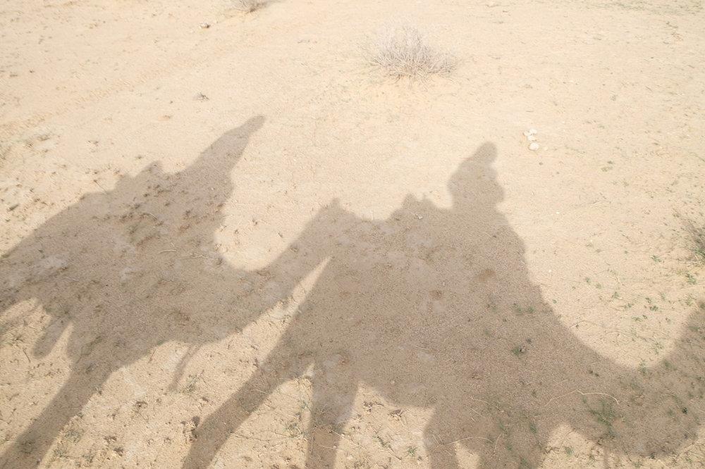 Camel shadows, Thar Desert