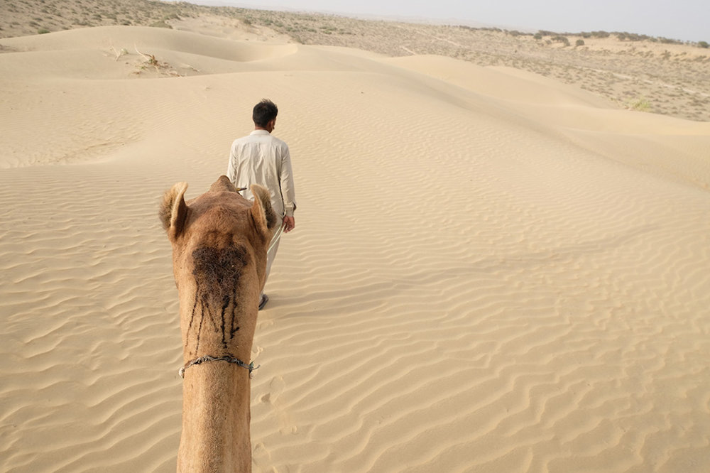 My view of my Camel, Thar Desert